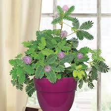 tropical indoor container plants