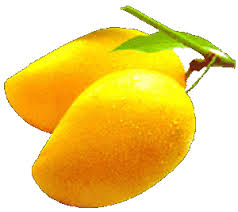 essay on my favourite fruit mango for class  essay on my favourite fruit mango for class 3