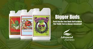 Bigger Buds Bloom Booster Bud Development Optimizer