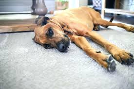 pet proof rugs the best friendly carpet and rug from home depot waterproof dog urine