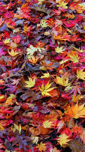 Retina Hd Wallpaper Collection - Fall ...