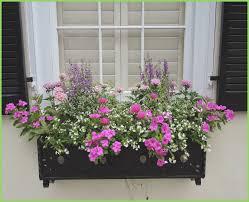 Decorative Planter Boxes Decorative Outdoor Flower Window Planter Box Webbirdco 45