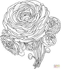 Small Picture Peony Flower coloring page SuperColoringcom Adult and