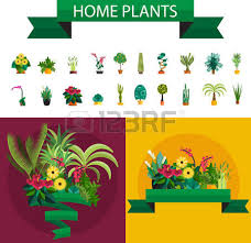 indoor home office plants royalty. dracaena illustration of houseplants indoor and office plants in pot home for royalty