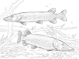 Small Picture Coloring pages Pike printable for kids adults free