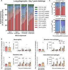 Gr1int/high Cells Dominate the Early Phagocyte ... - Frontiers