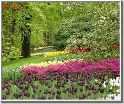 أجمل حدائق الورود,حدائق من الورود,مدينة الورد,دنيا الأزهار,عالم الورود,زهور بكل الألوا images?q=tbn:ANd9GcQ