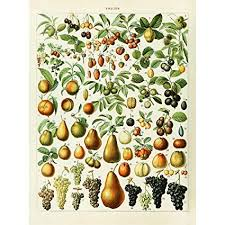Amazon Com Meishe Art Vintage Poster Print Fruits