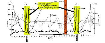 Bovine Pregnanacy