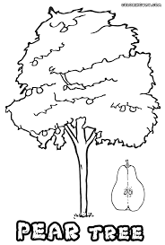 Small Picture Tree coloring pages Coloring pages to download and print
