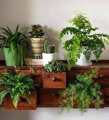 use an old dresser to create a stunning indoor garden plant some ferns and succulents in its drawers and also place some on top to create a beautiful