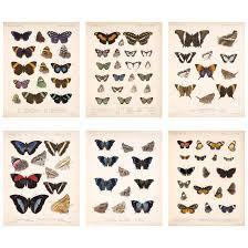 Moth Identification Chart Amazon Com Meishe Art Poster Print Vintage Butterflies Of