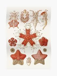 Starfish Chart Starfish Chart Illustration Poster