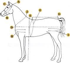 Size Chart Animals Horses Horses Horse Harness Horse