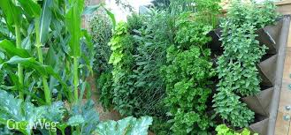 The 25 Best Garden Screening Ideas On Pinterest  Garden Privacy Wall Climbing Plants In Pots