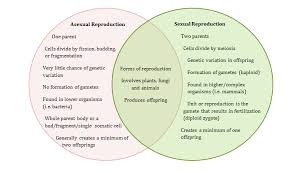 Venn Diagram Of Asexual And Sexual Reproduction Lesson 3 Graphic Organizer Ms Iris Lees Science Unit Plan
