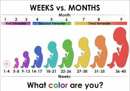 Pregnancy Chart In Months Pregnancy Chart Weeks Months Trimesters Www