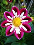 Best 25  Unique Flowers ideas on Pinterest   Unusual flowers ...