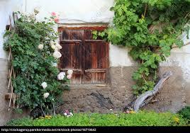 Das Alte Fenster Mit Holzfensterläden Und Mit Rosen Stockfoto
