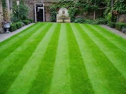 carpet grass. super agri green carpet grass seed (1000 pack) \u2026