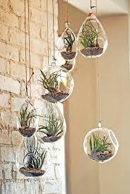 air plant terrarium diy esy plnt hanging kit makerskit