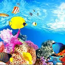 Fish Background Postimage Co