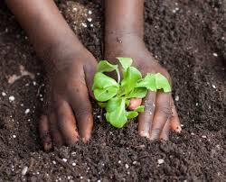 full steam ahead for vegetable garden soil prep