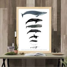 Whale Scale Chart Whale Size Chart Montessori Materials Homeschool Posters
