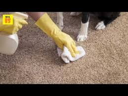 2017 carpet cleaning tips the main advanes of contracting arizona carpet cleaners