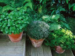 Kitchen Garden In Pots Growing Vegetables In Containers Diy