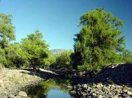 Sierra Álamos – Río Cuchujaqui (Area protegida) Images?q=tbn:ANd9GcQ-_rQJcpaMhLbnny2qOJkh3rhw1vmaVO82BsGRFPPNw77ELzus