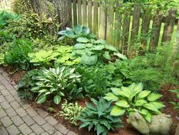 Small Picture Hosta Companion Plants Zone 5 Blog Archives Two Holt Our