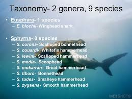 order carcharhiniformes ppt video online  taxonomy 2 genera 9 species