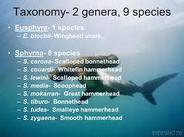 order carcharhiniformes ppt video online  taxonomy 2 genera 9 species