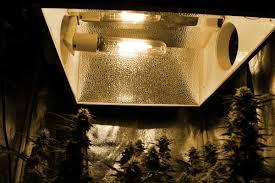 250w Grow Light Grow 4 7 Oz With A 250w Hps Beginner Tutorial Grow Weed Easy