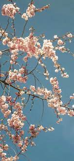 iPhone XR wallpaper 0980 flower ...
