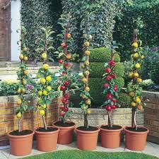 Excalibur Fruit Trees  FruitsHybrid Fruit Trees For Sale