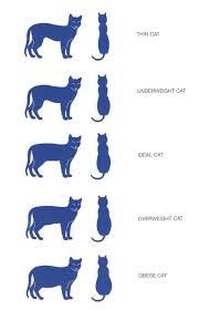 British Shorthair Weight Chart Kg 59 Accurate Ideal Kitten Weight Chart Kg