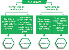 Nutrient Deficiency Symptoms And Solutions Omex