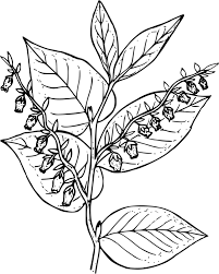 Coloring Book Tundra Colouring Pages Plants Drawing Free Commercial