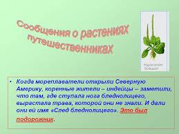 овальные растения о растениях путешественниках растения липецкой области красной книги краткое содержание рассказа охотник за растениями куплю недорого растения для озеленения участка растения
