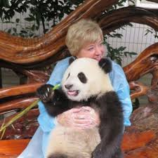linda mcmahon recently visited a panda preserve near chengdu china and posted this photo