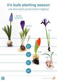 Bulb Crazy Plan A Spring Bulb Garden Now The Garden Glove