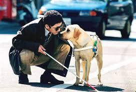 Resultado de imagen de ciegos con perros