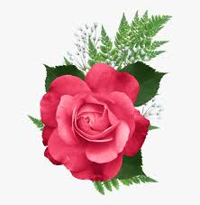 pink colour pink flowers hd png