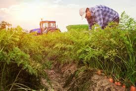 Study: My Understanding of Farms