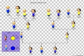 Pedigree Chart Genetics Phenotypic Trait Organism Family