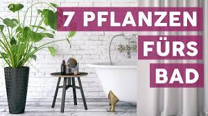 Diese 7 Pflanzen Sind Perfekt Fürs Bad Deko Youtube