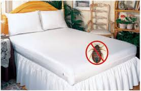 Complete Guide of Best Bed Bug Mattress Cover Bed Bugs Press