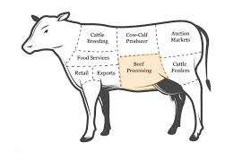 beef cow outline. Modren Outline The  In Beef Cow Outline F